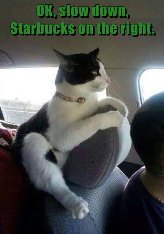 OK, slow down, Starbucks on the right. - Lolcats - lol