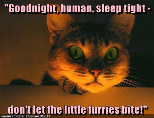 Quot Goodnight Human Sleep Tight Quot Lolcats Lol Cat