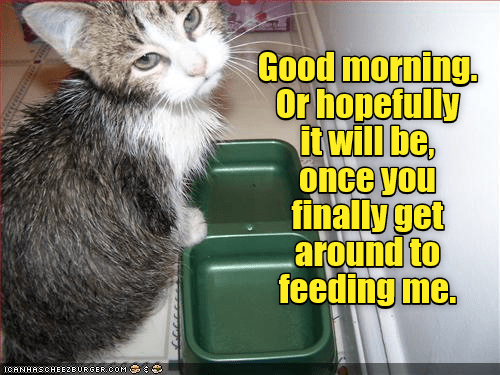 Good morning - Lolcats - lol | cat memes | funny cats ...