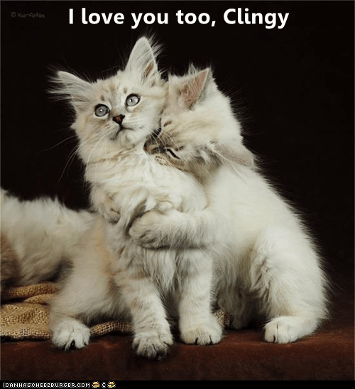 Love You Too Funny Meme : I love you too clingy lolcats lol cat memes funny