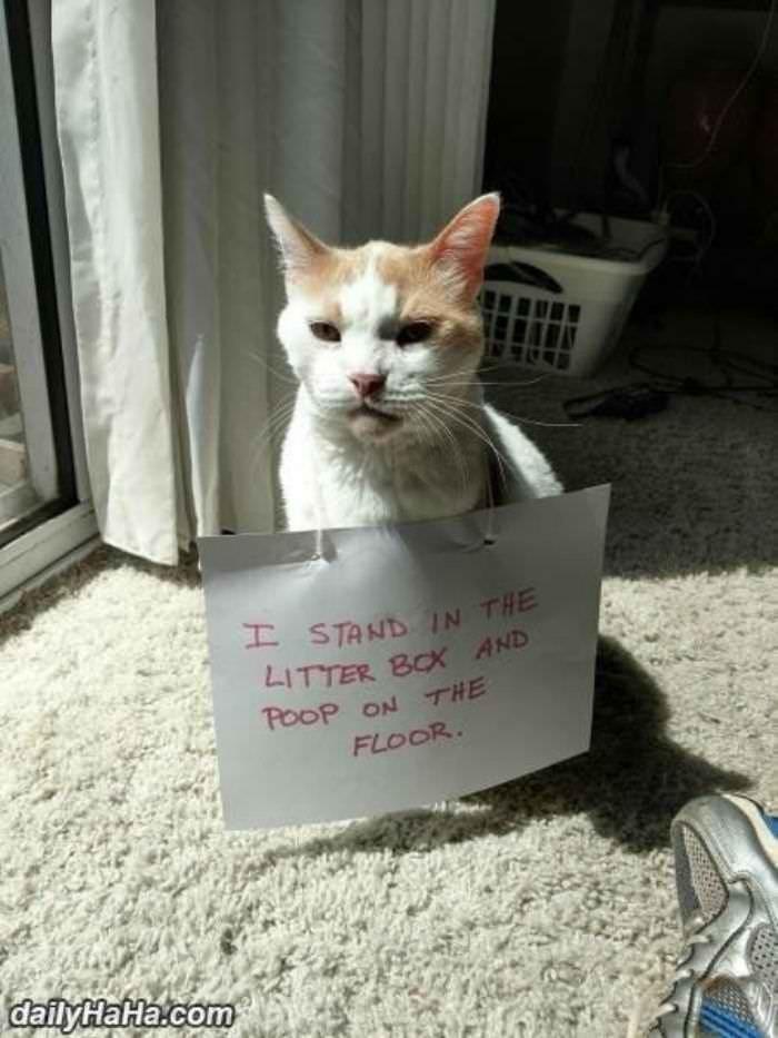 Cat Shaming I Can Has Cheezburger