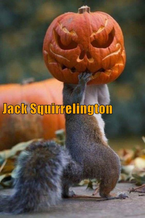 Jack Squirrelington