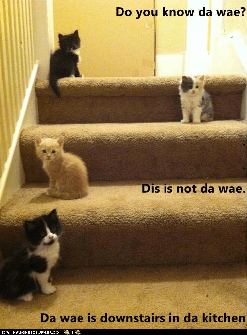 Do you know da wae? . . Dis is not da wae. Da wae is downstai