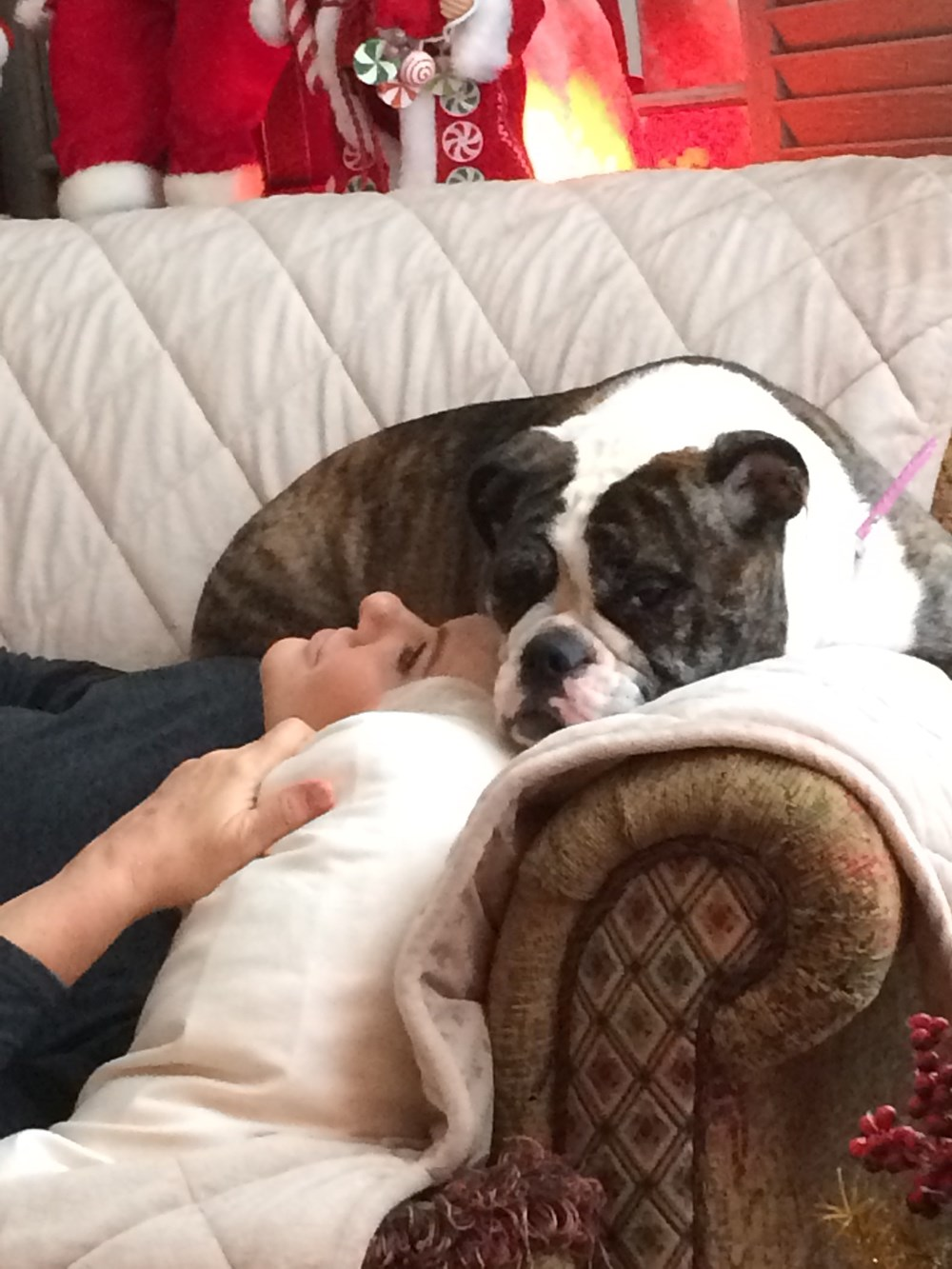 Lulu is always loving