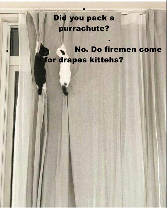 Did You Pack A Purrachute