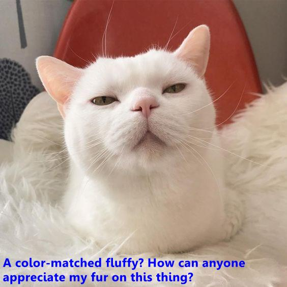 A color-matched fluffy?