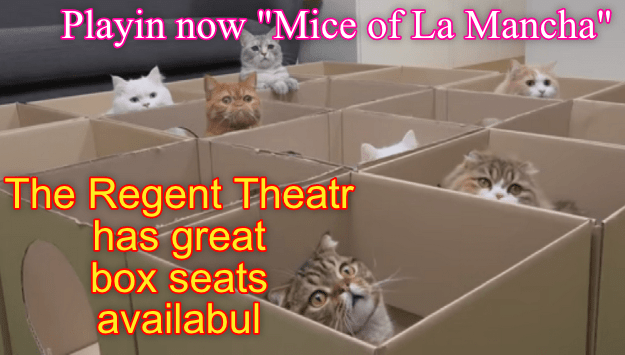 Kittehs arribed early to get great seats (opra-glasses 'n mice provided free)