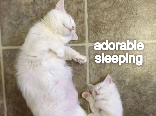 Lesson From Momcat