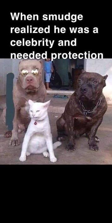 He Needs protection
