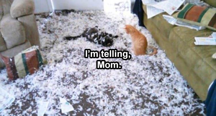 I'm telling mom!
