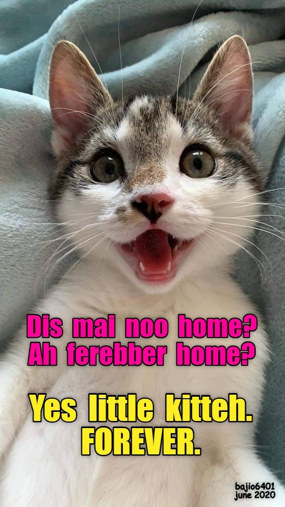 Yay Lolcats Lol Cat Memes Funny Cats Funny Cat Pictures With Words On Them Funny Pictures Lol Cat Memes Lol Cats The best memes from instagram, facebook, vine, and twitter about cute yay. funny pictures lol cat memes lol cats