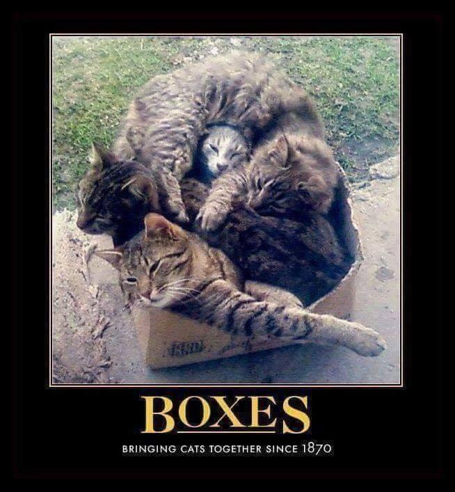 Boxes... - Mimic News