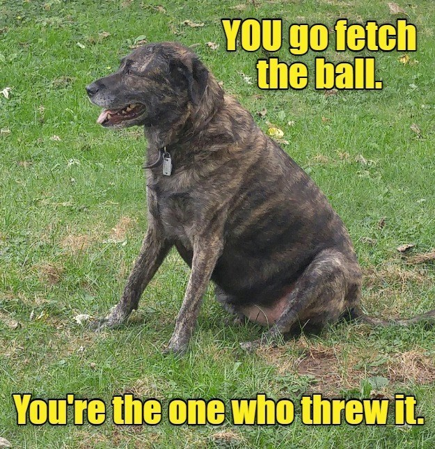 you fetch