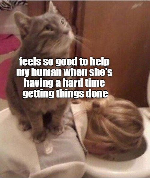 helpful cat is helpful