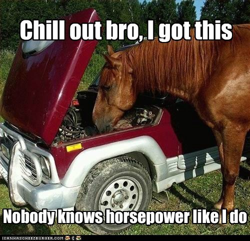 I know a thing or two about horsepower