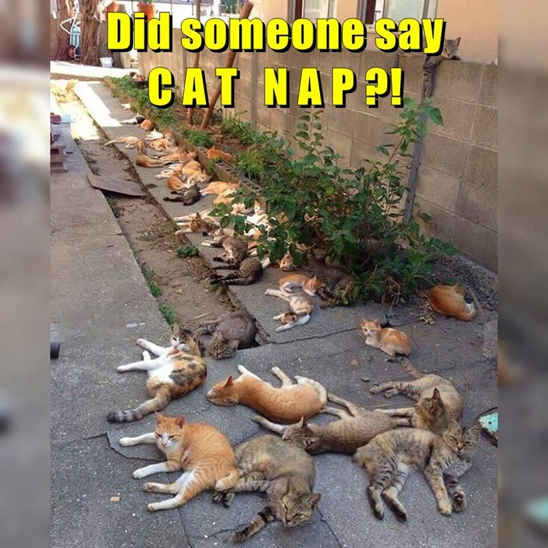 time for a cat nap!