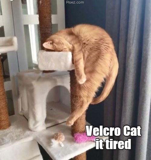 velcro cat is tired cat