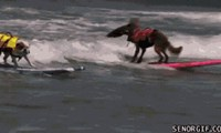 And These Pooches Enjoy The Waves
