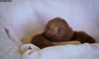 Sloth, What Are You Thinking About?