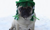 Not everybody likes St. Patrick's Day...