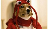 Lobster Dogs, Assemble!