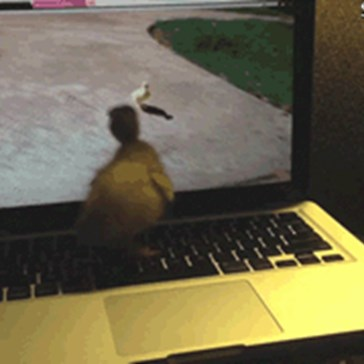 5 GIFs of Franklin The Duckling That Are Necessary to View For The Betterment of World