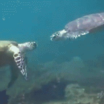 20 Gifs to Shell-ebrate World Turtle Day!