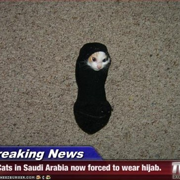 Breaking News - Cats in Saudi Arabia now forced to wear hijab.