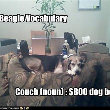 Couch (noun) : $800 dog bed