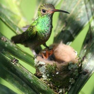 Itty Birdy Family