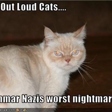 Laugh Out Loud Cats....  A Grammar Nazis worst nightmare