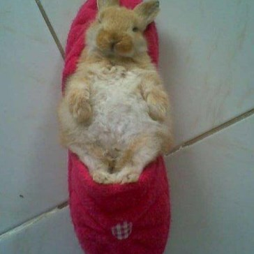 Ellie lying on the slipper..:)