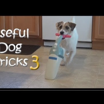 Animal Videos: More Useful Tricks With Jesse the Dog