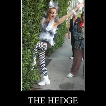 THE HEDGE