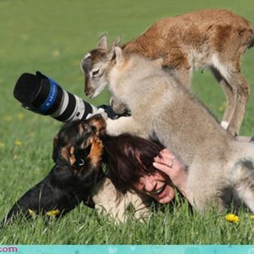 Acting Like Animals: The Wrong Kind of Tripod...