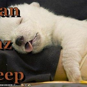 I can Haz Sleep