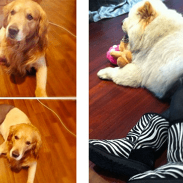 12 Dogs Wearing Pantyhose