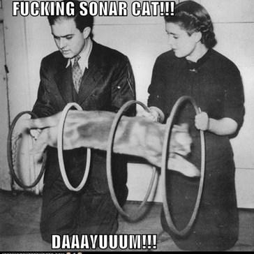 FUCKING SONAR CAT!!!  DAAAYUUUM!!!