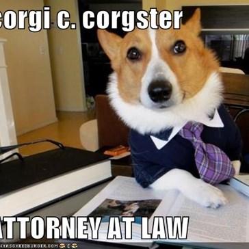 corgi c. corgster