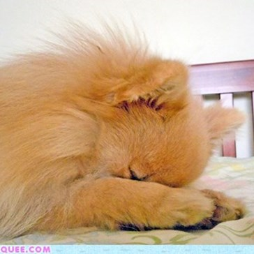 Reader Squees: Pom Prayers