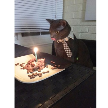Nine Animals Celebrating Their Birthday In Style