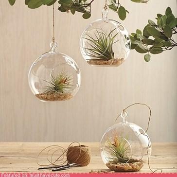 Glass Garden Globes