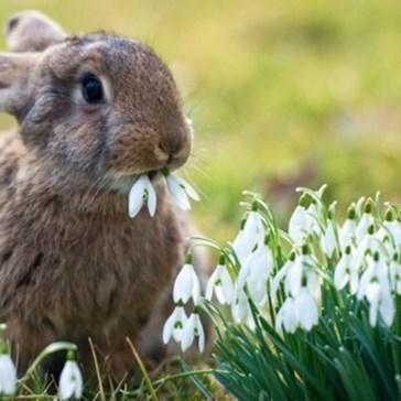 Bunday: Flower Eater