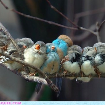 Daily Squee: Birdie Bundle