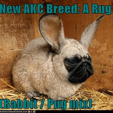 New AKC Breed: A Rug  (Rabbit / Pug mix)