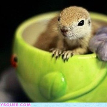 Cup of Squee