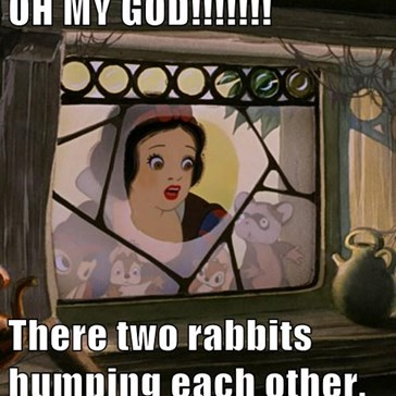 OH MY GOD!!!!!!!  There two rabbits humping each other.