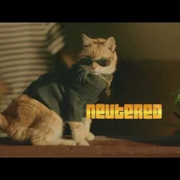 Watch and Learn as Scooter the Neutered Cat Shows You How Hip it is To Spay/Neuter Your Cats