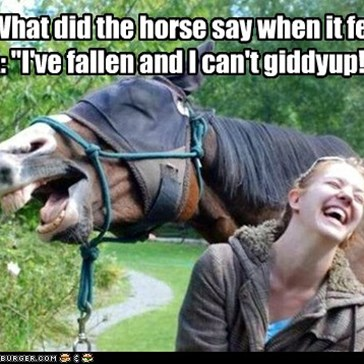 "Q: What did the horse say when it fell?  A: ""I've fallen and I can't giddyup!"""