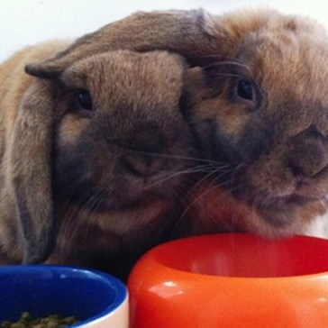 Bunday: Friendship in Bunny Land